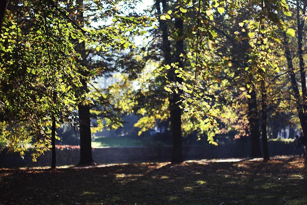 Zamek w Łańcucie jesienią