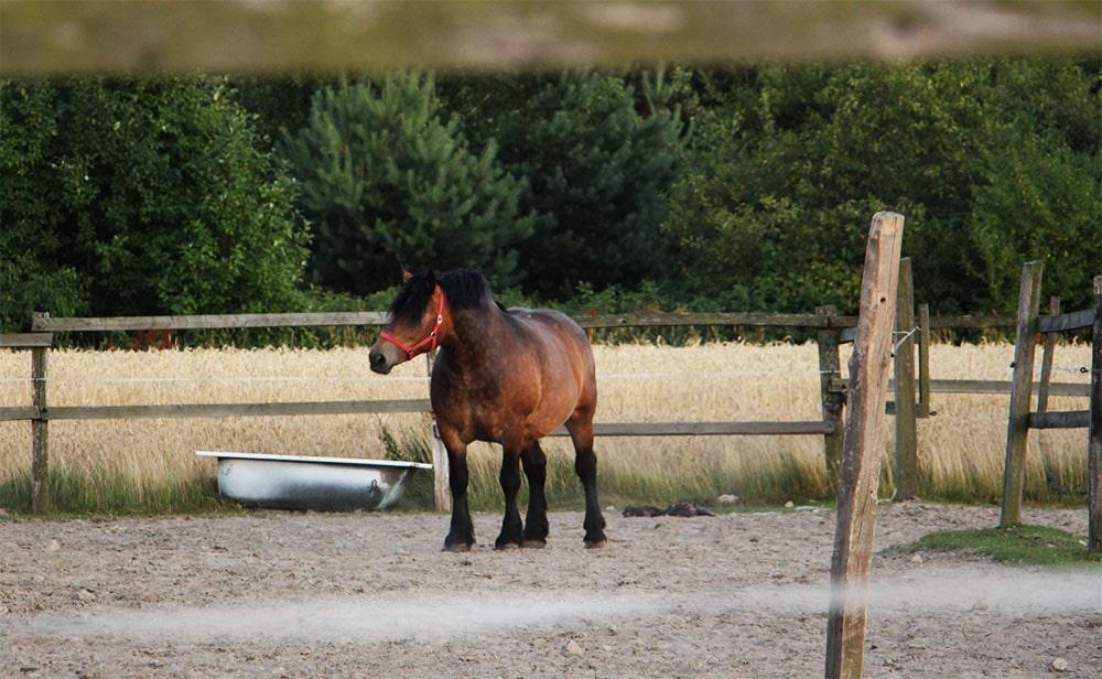 Nowy Pawłów - hodowla koni w gospodarstwie Państwa Maksymiuków