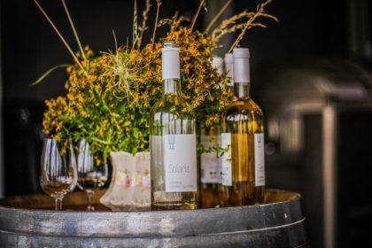Wino z Winnicy Chodorowa