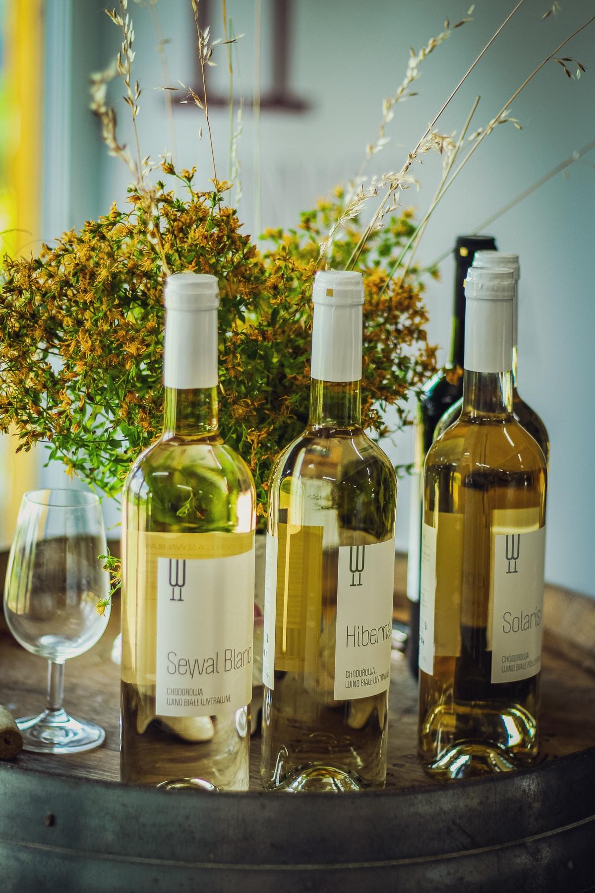 Winnica chodorowa degustacja