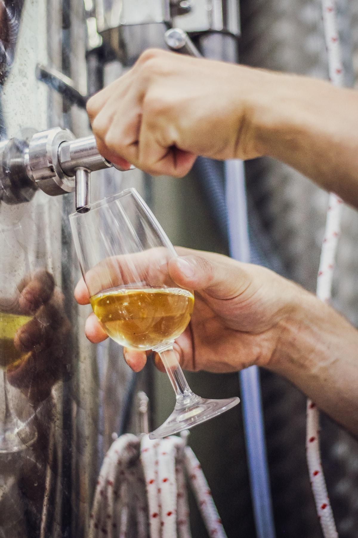 Winnica chodorowa fermentacja