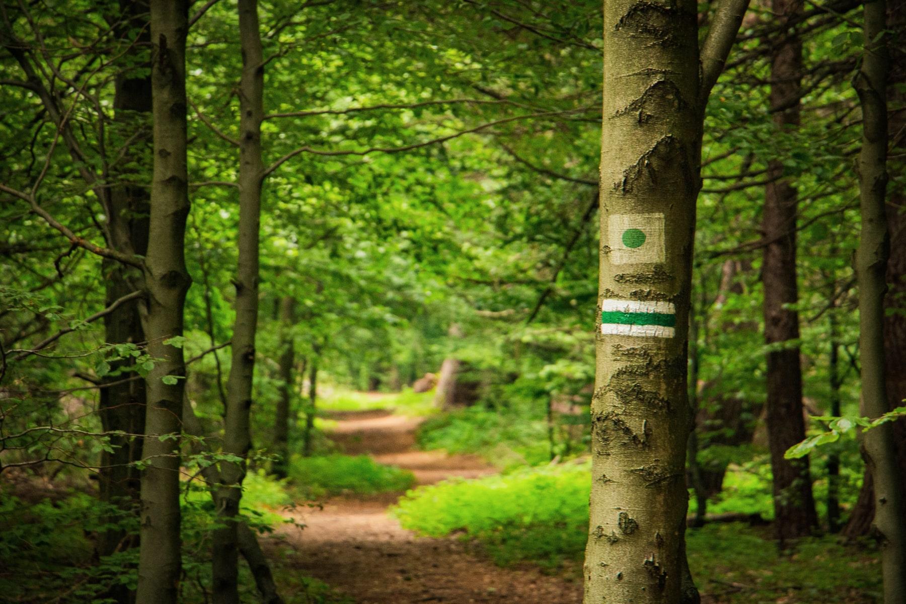 zielony szlak magurski park narodowy