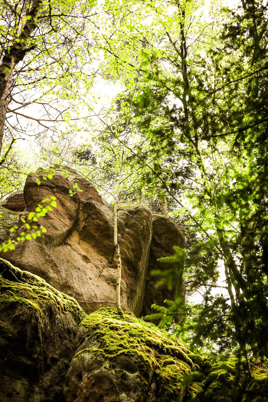 Diabli Kamień na ścieżce przyrodniczej Folusz