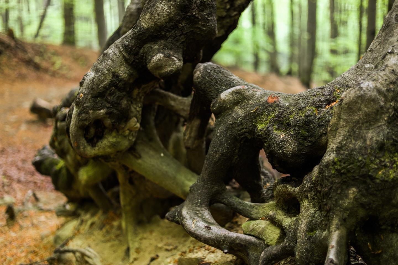 Drzewa w Magurskim Parku Narodowym